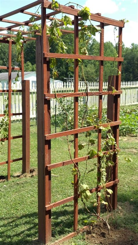 backyard grape vine trellis 12 best images about grapevine trellis ideas on pinterest