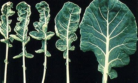 how does def last rol molibdeno en el cultivo de plantas pro mix