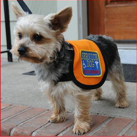 service puppy small service vest official vest for small dogs