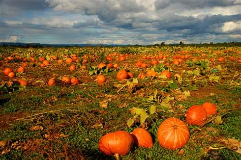 Yamhill County Records Oregon Historical County Records Guide Yamhill County Scenic Images Pumpkin Field