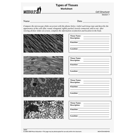 Types Of Tissues Worksheet by Types Of Tissues Worksheet W26692