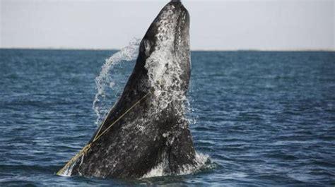 los animales marinos al 8498256720 esto ocurre a los animales marinos cuando lanzamos basura al oc 233 ano planeta ciencias el