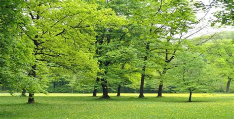 alberi giardino alberi quali mettere iin giardino ed i loro benefici