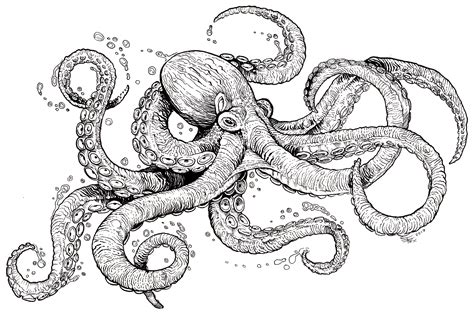 octopus coloring sheet coloring  young adults