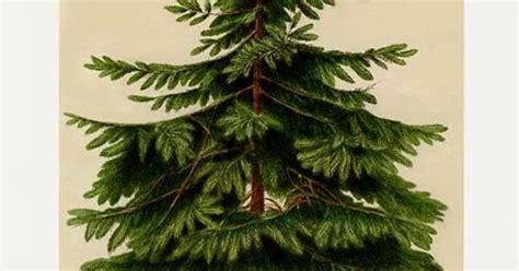 krismas tree to botni name dreaming of vintage vintage botanicals