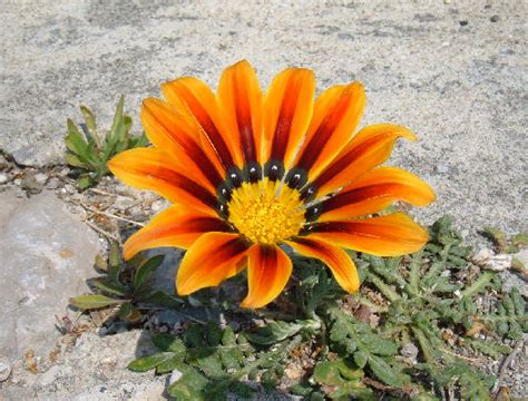 nome di fiore nome di un fiore urgentiximoooooooo yahoo