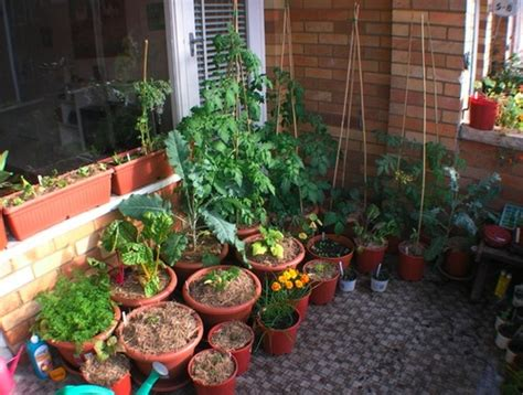 balcony vegetable gardens balcony vegetable garden