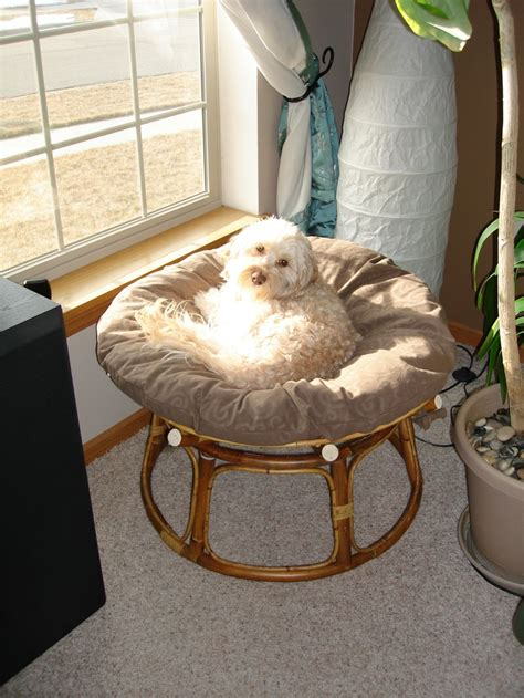 papasan bed 51 best ideas about just too cute on pinterest cats