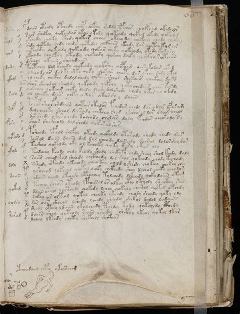 picture book manuscript voynich manuscript the book that can t be read