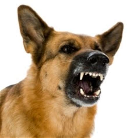 symptoms of rabies in dogs rabies symptoms in dogs treatment rabies vaccine for dogs