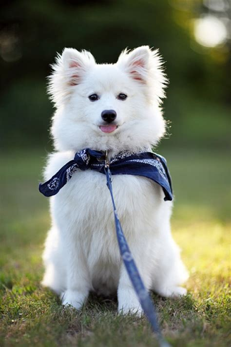 names for white dogs 40 best white names for a puppy pethelpful