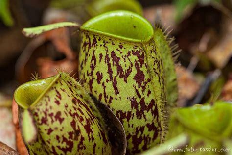 pflanzen pflanzen pflanzen in nanopics pflanzen foto
