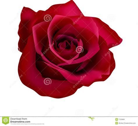imagenes de flores libres ilustraci 243 n de rosas rojas con el acoplamiento im 225 genes