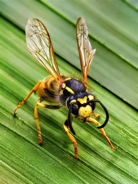 bees wasps and ants and other stinging insects classic reprint books fieggentrio waar zitten vliegende insecten tijdens een