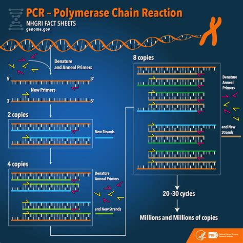 it was about fact based analytic research untold stories and moreã books pcr polymerase chain reaction