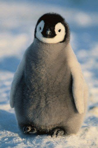 understanding a photograph penguin 0141392029 12 cute animal pics for your thursday you ve penguins and animal