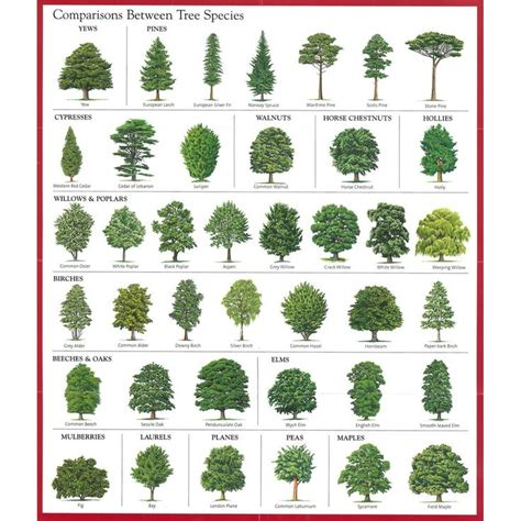 tree species guide best 25 tree identification ideas on tree