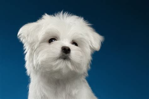 pet stores in ct that sell puppies puppies and dogs for sale in ct buy in ct breeder pet store
