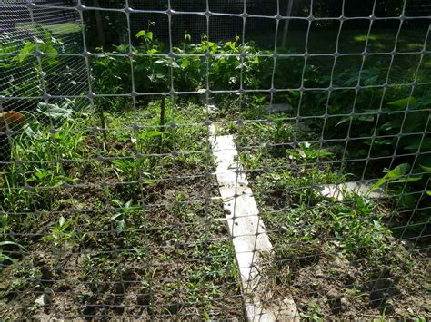 plastic mesh fencing not for kitchen gardens your
