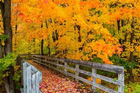 of michigan colors steve q photo michigan fall color 2012 day 1 grayling