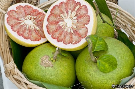 Jeruk Bali Pamelo 10 best tropical fruits to try in bali balinese fruits