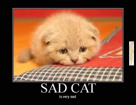 Sad Cat Memes - feeling sad memes image memes at relatably com