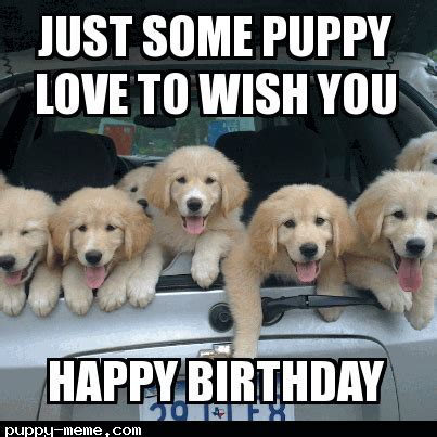 Puppy Birthday Meme - image gallery happy birthday puppy meme