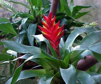 pianta grassa con fiore rosa piante grasse con fiori