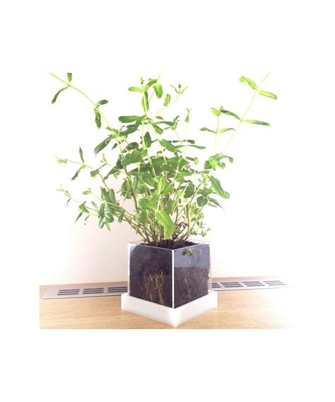 vaso per piante grasse vaso per piante grasse e succulente in plexiglass trasparente