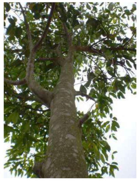 Mentari Bersinar Lagi damainya hati kala mentari bersinar lagi hewan tumbuhan langka dan dilindungi di indonesia