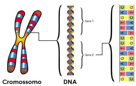 imágenes de kamasutras 2015 a origem de novos genes e pseudogenes