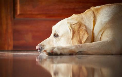 best dogs for anxiety common anxiety problems and best pet anxiety treatments
