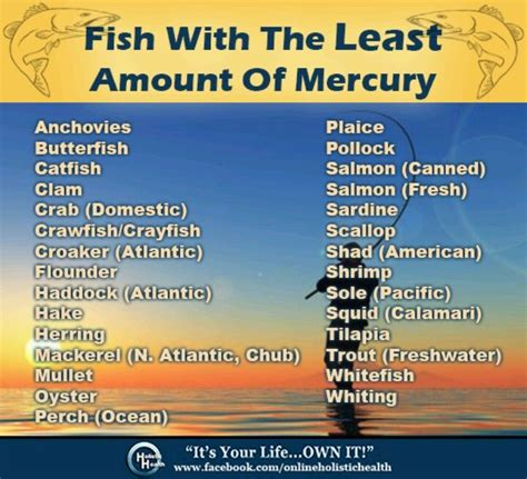 Best Mercury Detox Program by 206 Best Images About Food Healthy Tricks And Tips