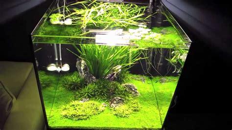 beleuchtung 60l aquarium iwagumi aquascape 60x60x60