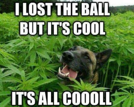 Lost Dog Meme - forget the ball