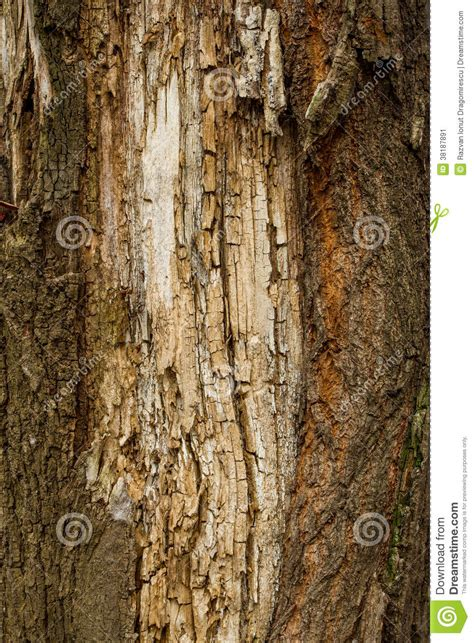 brown bark texture stock image image 38187891