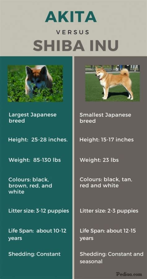 how between puppies difference between akita and shiba inu