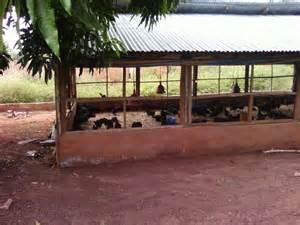 Barn Raised Chicken Hope For Nigeria 1 John 3 17