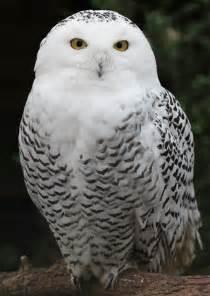 Snowy owl christmas tree topper myideasbedroom com