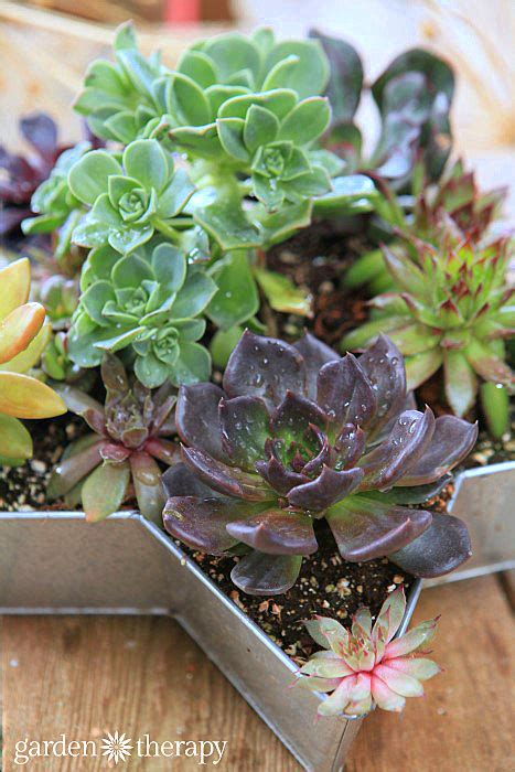 Beginner S Guide To Growing Succulents Garden - the essential guide to growing happy healthy succulents