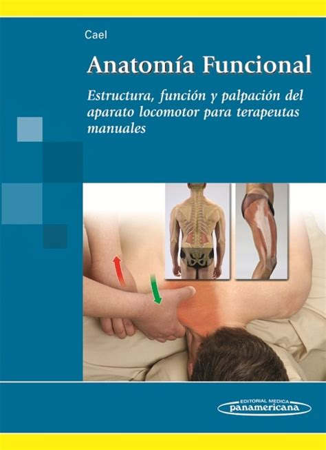 libro anatoma para posturas de anatom 237 a funcional estructura funci 243 n y palpaci 243 n para