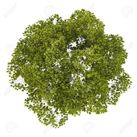tree images free tree png plan free pictures images tree png plan