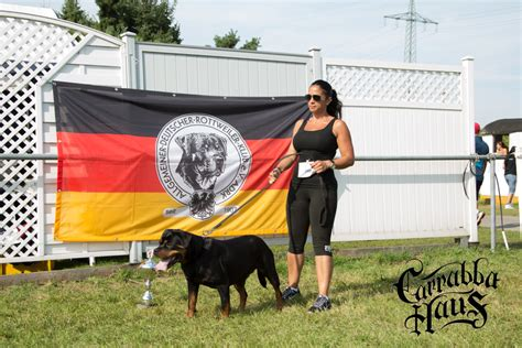 purebred german rottweilers for sale scarlet vom carrabba haus v1 open class at the 2015