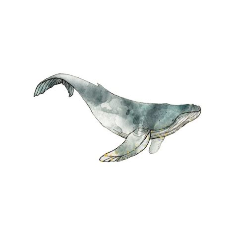 humpback whale tattoo humpback whale www pixshark images