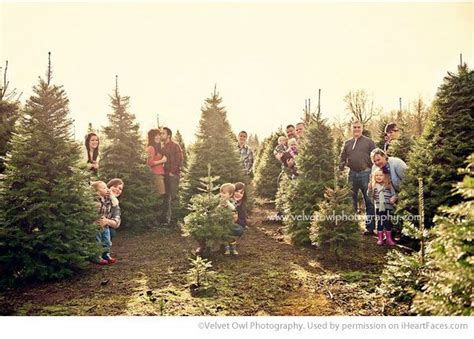 christmas tree farm family photo photography inspiration
