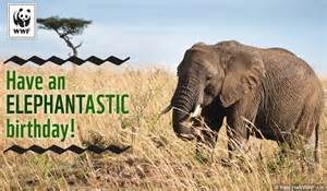 birthday ecards from wwf free birthday ecards world wildlife fund