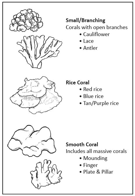 Coral Reef Worksheets For by Coral Coral Bleaching Survey Activity Guide Reefquest
