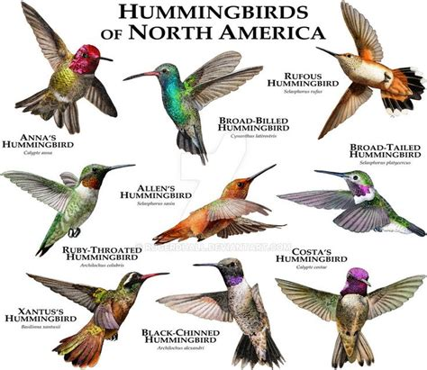 515 best hummingbirds they always remind me of my