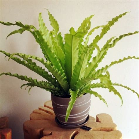 plants that need little light what indoor plants need little light interior design ideas avso org