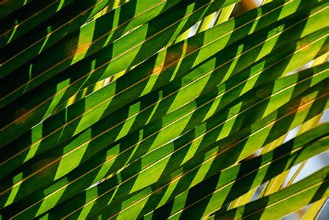 definition of pattern in nature evmestycor patterns in nature photography